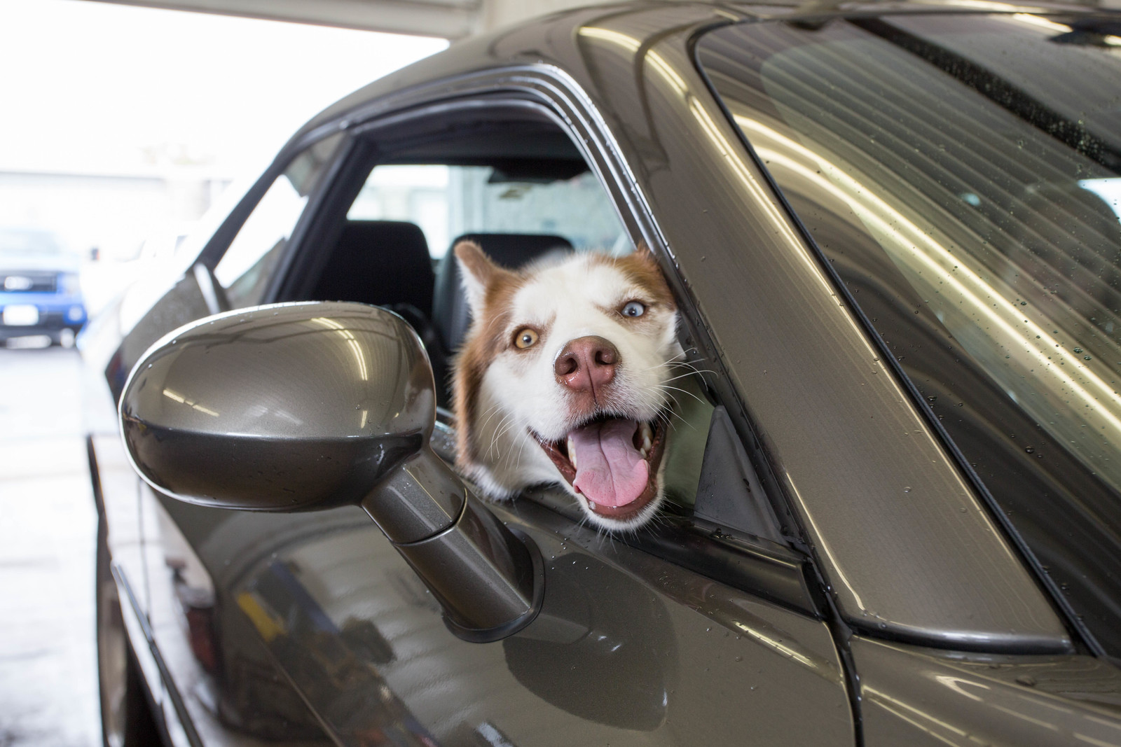 dog-fan-johns-auto-service
